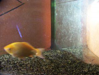 Bob et Nemo